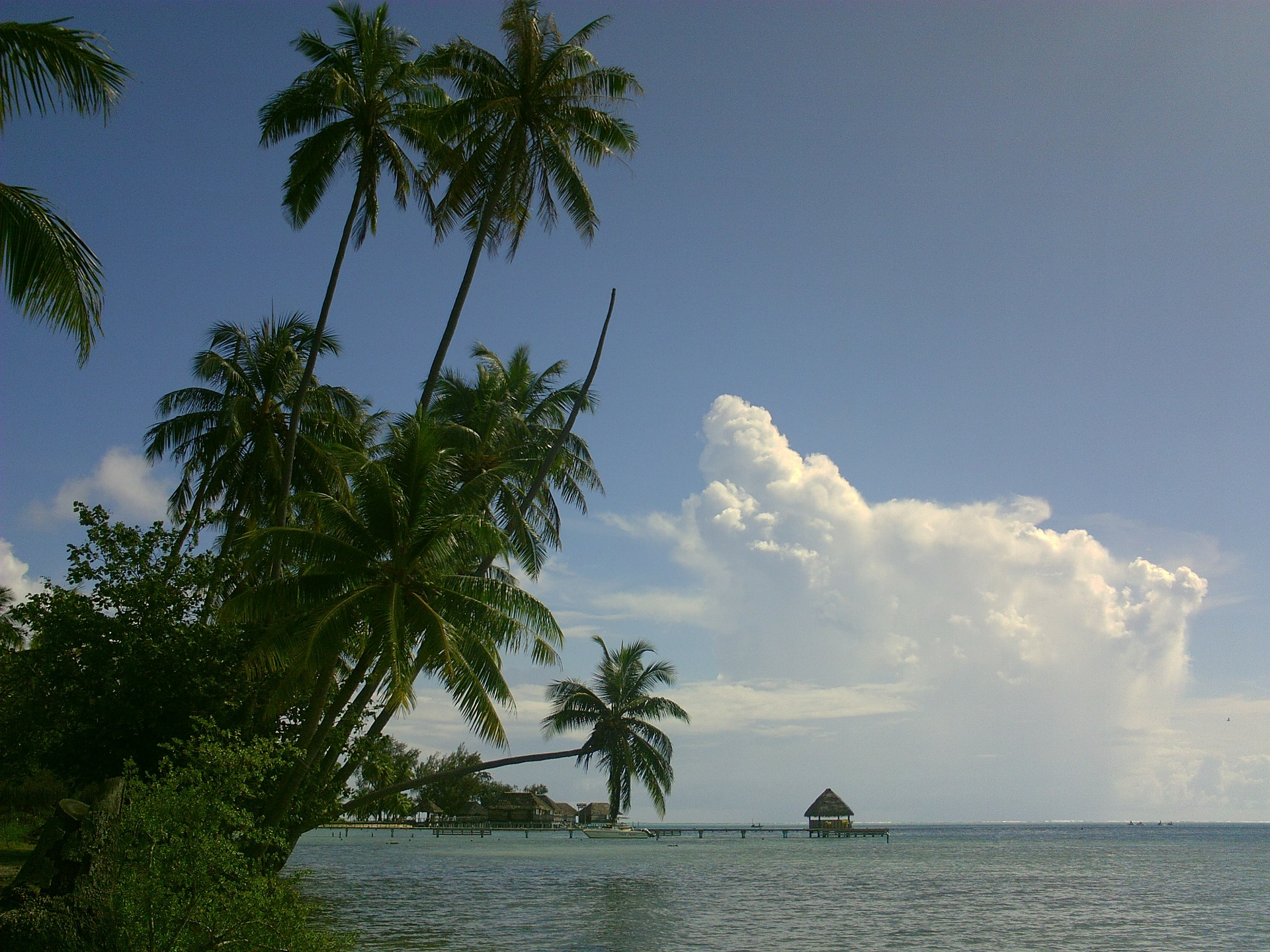 coconut-275806_1920